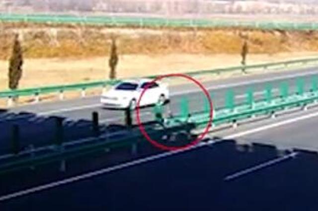 """高速上""""狐影频现"""" 引发多起事故 后面还有好几千只呢"""