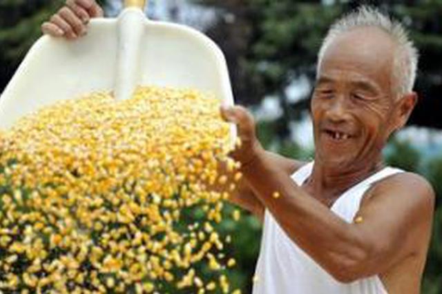 全省收购粮食288亿公斤 入库玉米已超过商品量八成