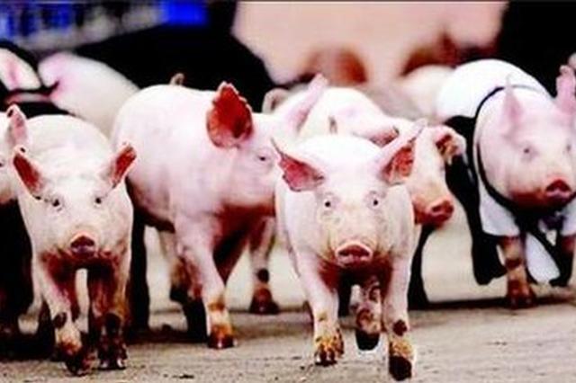 吉林省生猪收购价格小幅下降