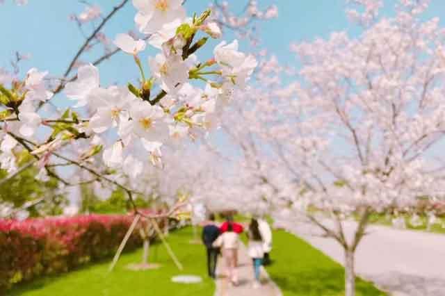 江西春季旅行目的地最强推荐