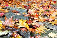 你一定不能错过的最诗意的庐山秋天