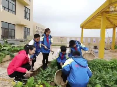 """小学楼顶变""""开心农场"""",学生当""""农夫""""种下瓜果蔬菜"""
