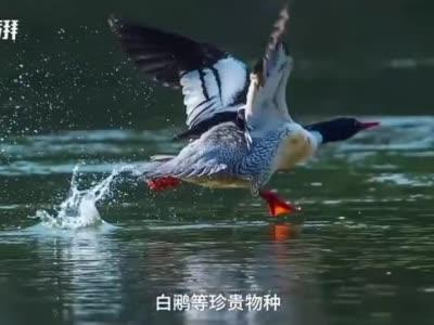 江西九岭山保护区:守护森林 把青春嫁接在枝头上