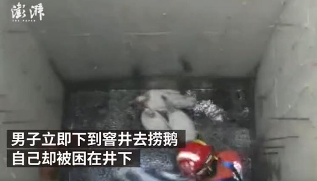男子下窨井捞鹅体力不支被困 让消防员先救3只鹅