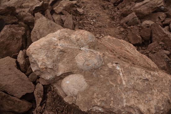 江西萍乡上栗工业园区内施工现场发现的恐龙蛋化石。受访者供图