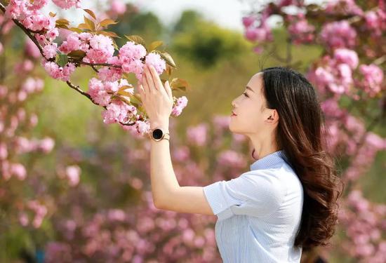 """""""嘿,准备一下,我带你去篁岭看樱花!"""""""