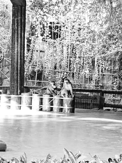 猕猴顽劣被景区关禁闭 笼子上挂罪行牌不守猴规