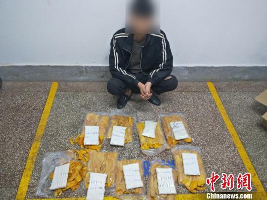利用芒果干藏毒被识破 警察缴获海洛因1.56公斤