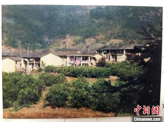 图为:躲藏的柑橘地 台州中院供图