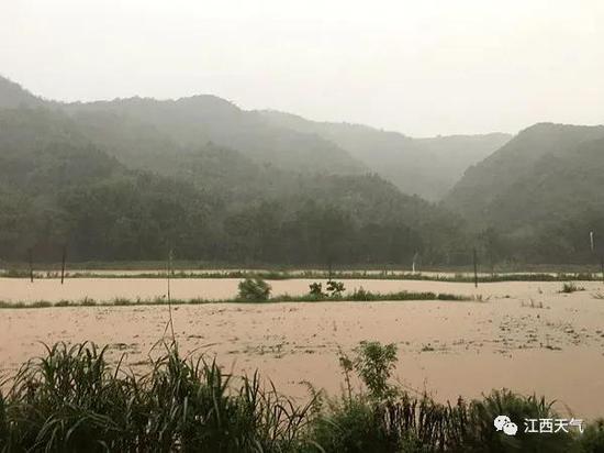 7月7日,鄱阳县莲花山乡强降雨之下农田被淹 图/黄秀升