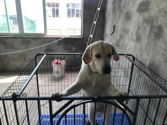 吴美兰的狗寄养在吴爱梅家,洪水来袭后第二天也被接了出来。