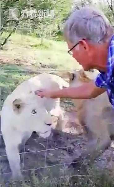 """丈夫抚摸母狮""""宝贝过来""""遭死咬 妻子尖叫拍全程"""