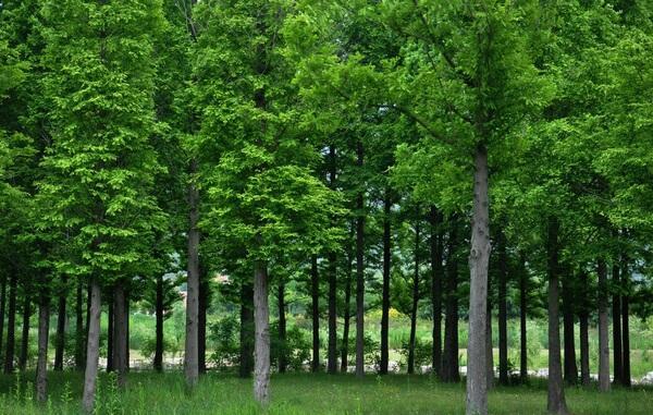 发挥生态资源优势 九江林业总产值达432.6亿元