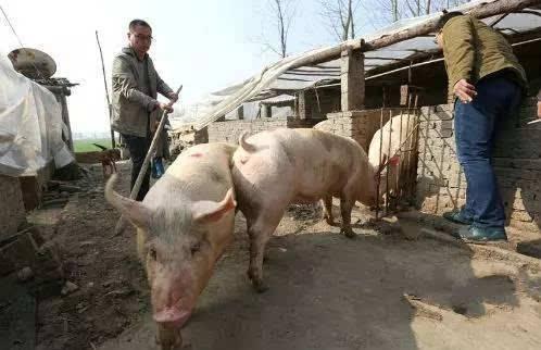 注重长效治理 江西划定5.12万平方公里畜禽禁养区