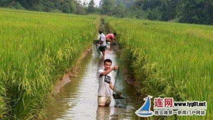 明升:稻渔综合种养带动农民年增收5亿元