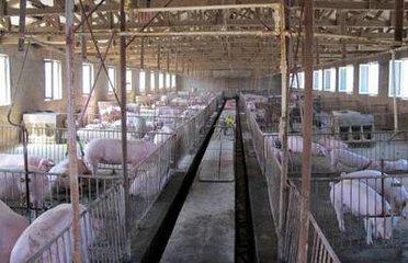 2020年明升体育全市畜禽粪污综合利用率达85%