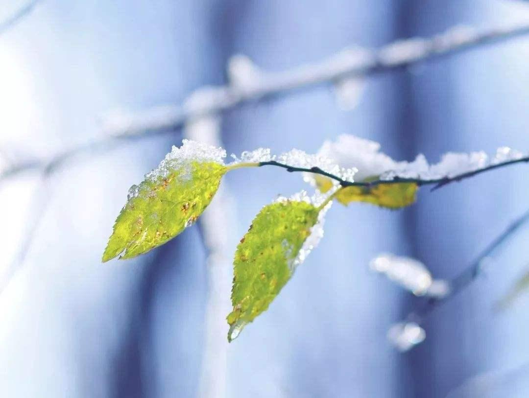 """江西32个县市出现降雪 未来一周雨雪仍是""""主角"""""""