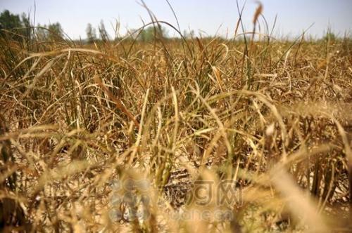 江西省旱情灾情明显缓解 受旱面积减少93万亩