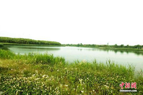 龙游湖生态公园。袁秀月 摄