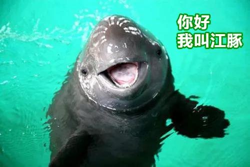 """江西全面加强""""水中大熊猫""""江豚保护"""