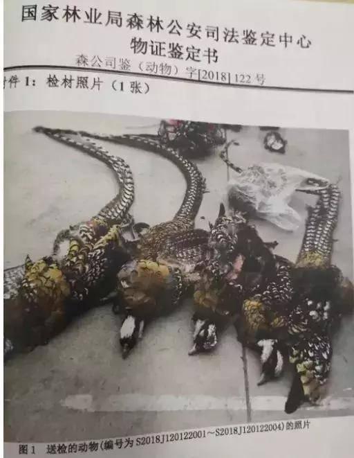 江西男子买条野生大鱼晒朋友圈公开叫卖 结果被刑拘