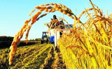 江西落实粮食安全省长责任制 组织检查每年不少于2次