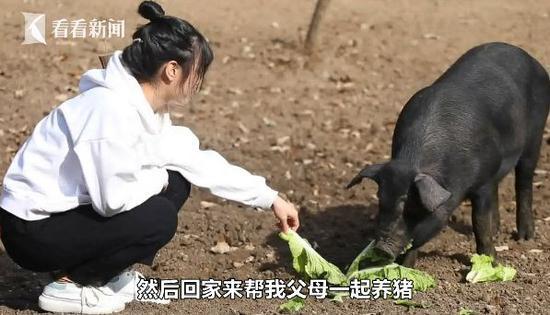 24岁女儿专心养猪被催婚 亲爹放话:陪嫁300头猪