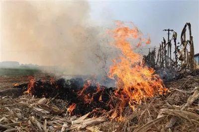 临川开展秸秆垃圾焚烧巡查整治工作 有人被罚2000元