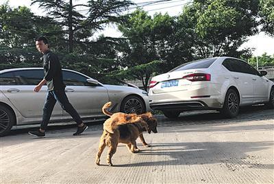 5月23日,东城,未拴绳的宠物狗在室外公共区域活动。