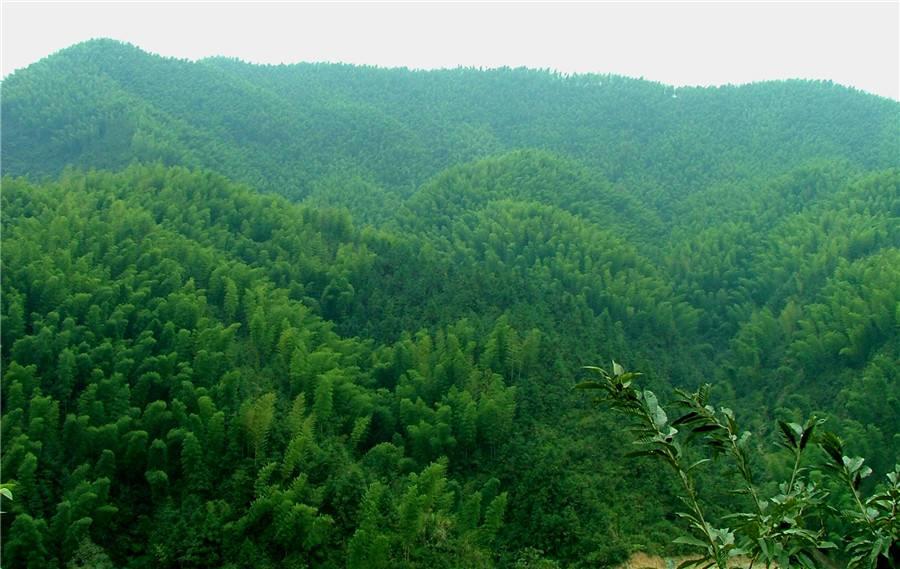 明升林长制成国家生态文明试验区建设亮点