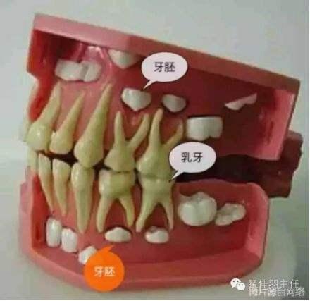 专家:乳牙保护需注意 吃零食频率不建议过高