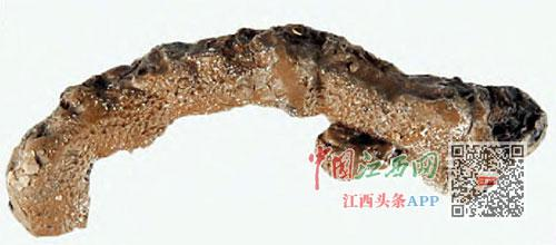 刘贺墓中发现的中草药地黄的正面