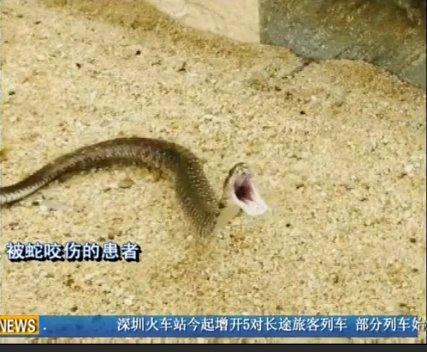 七寸针蛇的图片