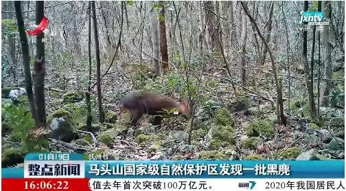 抚州发现一批国家一级保护野生动物