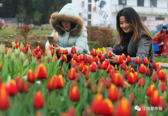 初春的湾里遇上郁金香花节,当花儿含苞待放的时候,湾里也让人醉!