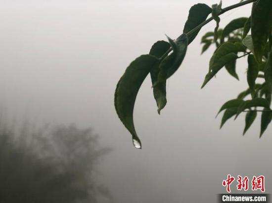 立夏以后,江南正式进入雨季,雨量和雨日均明显增多,连绵的阴雨天气将持续。 袁汝晶 摄