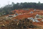 南昌翡翠园违法毁林开发墓区 相关部门展开调查