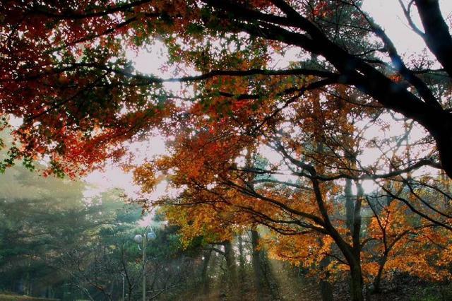遂川南风面自然保护区晋升国家级 江西共有16处
