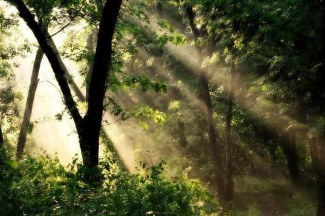 电影里面的那些奇幻的森林秘境 江西都有