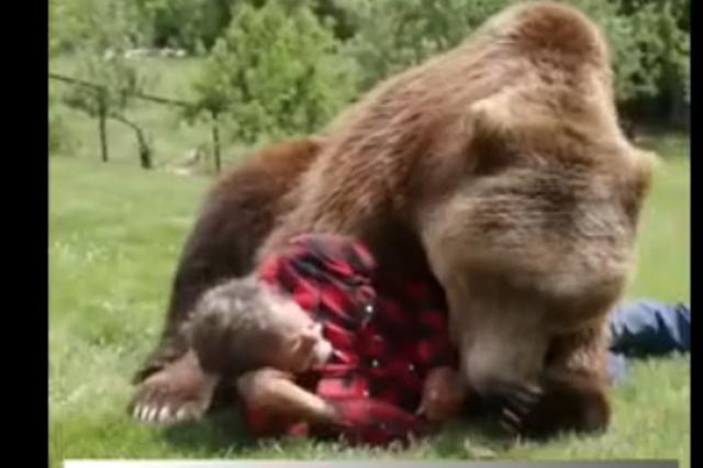 男子与千斤重大灰熊成好友 把头放进熊嘴里安然无恙