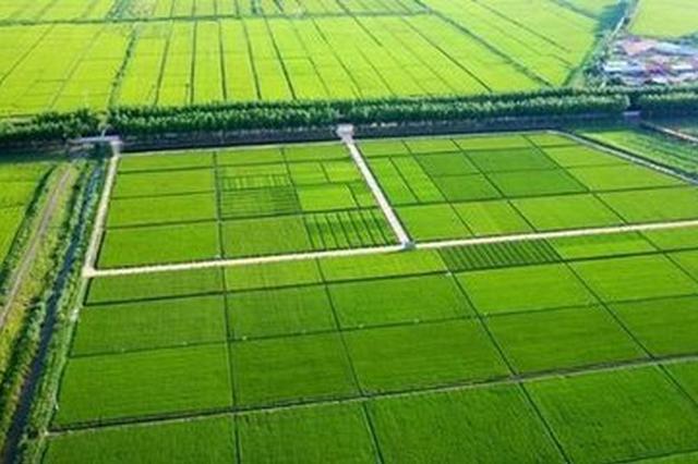 明升体育将重点打造明升体育县蒋巷镇等3个万亩连片精品工程