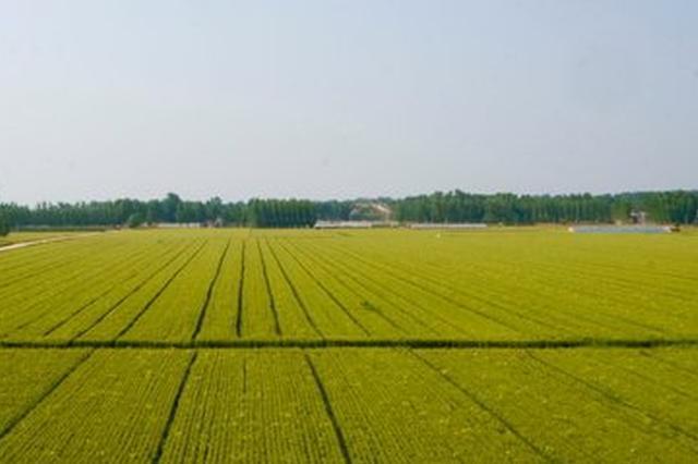 今年明升建290万亩高标准农田 发展中药材等作物