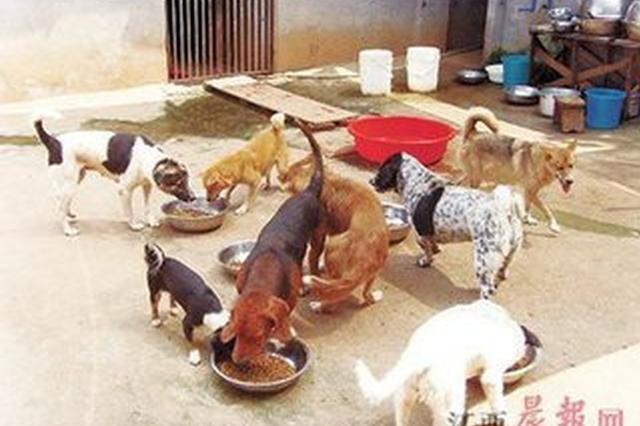 明升体育开出首张违规养犬罚单 200只流浪犬被收容