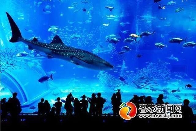 赣州龙川极地海洋世界明年六月开放 就在章贡区