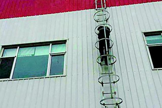 120司机平时恐高 为救人徒手爬20多米外挂楼梯
