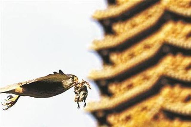 北大师生监测校园物种达15年 记录超300种动物