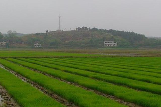 南昌发布强对流天气农事建议 指导农民做好早稻生产