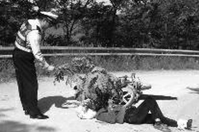 老人遇车祸骨折不能动 民警折树枝为其遮太阳