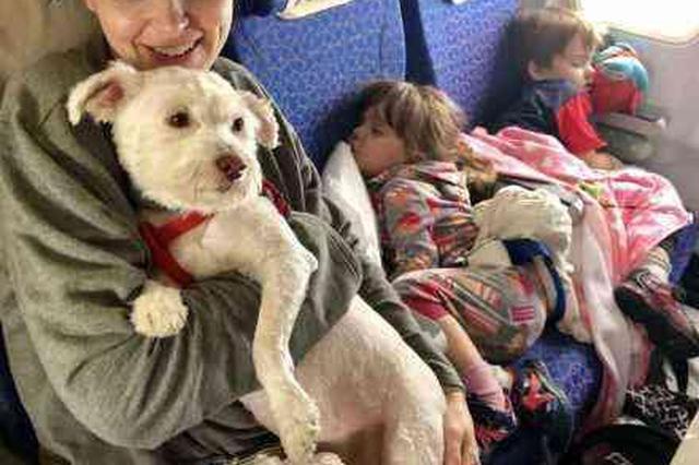 抚慰犬上飞机全程没叫 航空公司:这几种狗可陪飞