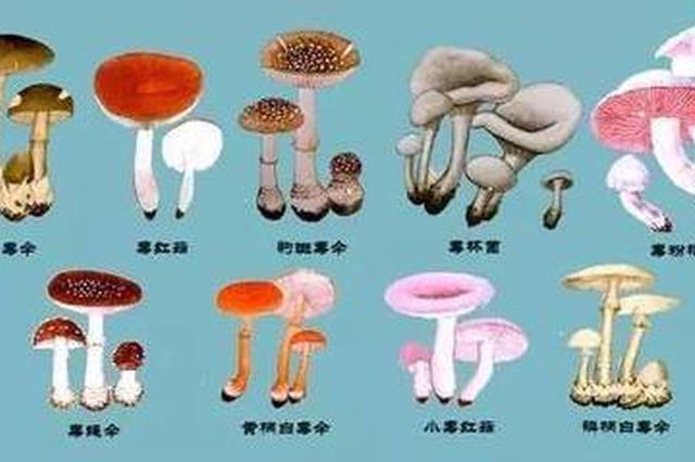 江西省食安办印发通知:勿采食野生蘑菇防中毒